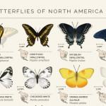Für alle Freunde von Schmetterlingen!