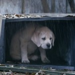 Budweiser: Lost Dog    #superbowlcommercial